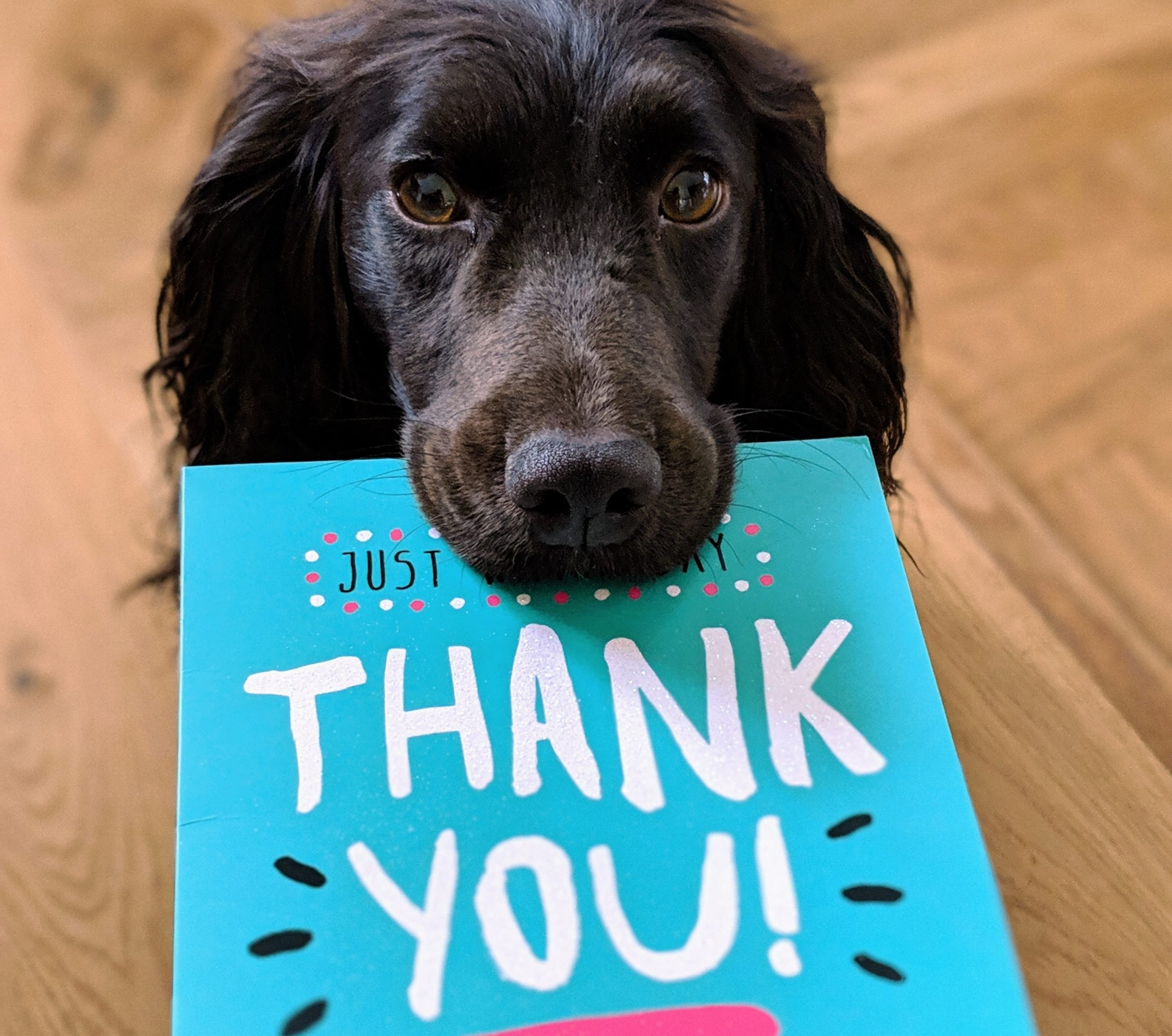 dog holding thank you card in mouth
